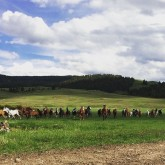 Horses being released into the pasture.